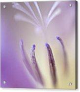 Fragrant Freesia  Acrylic Print