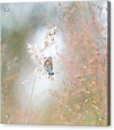 Frame Of Grasses Acrylic Print