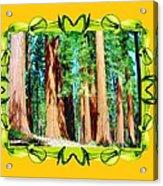 Framed Sequoias Acrylic Print