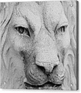 Frankie Lion Acrylic Print