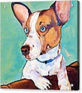 Frankie Acrylic Print