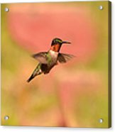 Free As A Bird Acrylic Print by Lori Tambakis