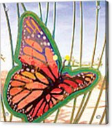 Free Butterfly Fly Acrylic Print