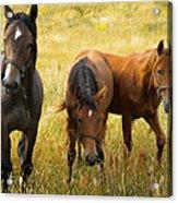 Free Happy Horse Joy On Samsoe Island Denmark  Acrylic Print