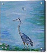 Free Spirit Blue Heron Acrylic Print