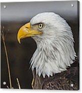 Freedom's Spirit Acrylic Print