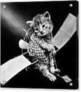 Frees Kittens, C1914 Acrylic Print