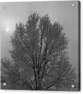 Freezing Fog Acrylic Print