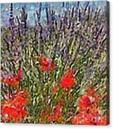 French Lavender Field Acrylic Print