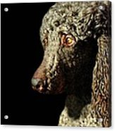 French Poodle Standard Acrylic Print by Diana Angstadt