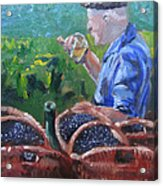 French Vineyard Worker Acrylic Print by Kendal Greer