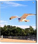 Frequent Flyer Acrylic Print