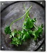 Fresh Celery Acrylic Print
