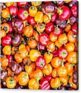 Fresh Colorful Hot Peppers Acrylic Print