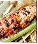Fresh Decorative Indian Corn Acrylic Print