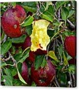 Fresh Fruit Acrylic Print