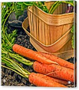 Fresh Garden Vegetables Acrylic Print