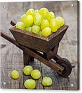 Fresh Green Grapes In A Wheelbarrow Acrylic Print