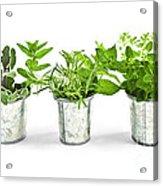 Fresh Herbs In Pots Acrylic Print by Elena Elisseeva