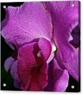 Fresh Orchid Acrylic Print