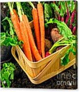 Fresh Picked Healthy Garden Vegetables Acrylic Print