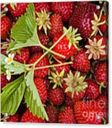 Fresh Picked Strawberries Acrylic Print