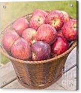 Fresh Red Apples Acrylic Print