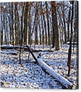 Fresh Snow In The Woods Acrylic Print
