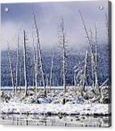 Fresh Snowfall And Bare Trees Acrylic Print