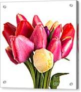 Fresh Spring Tulip Flowers Acrylic Print