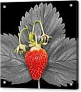Fresh Strawberry And Leaves Acrylic Print