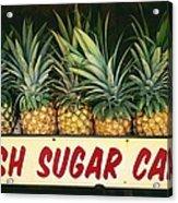 Fresh Sugar Cane Acrylic Print