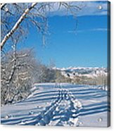 Fresh Tracks Acrylic Print
