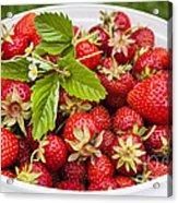 Freshly Picked Strawberries Acrylic Print