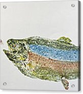 Freshwater Rainbow Trout With Fly Acrylic Print by Nancy Gorr