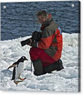 Friend Of The Penguins... Acrylic Print