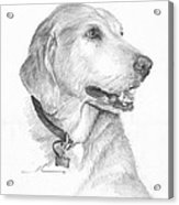Friendly Dog Pencil Portrait  Acrylic Print