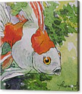Friendly Fantail Tiny Goldfish Painting Acrylic Print