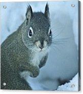 Friendly Squirrel Acrylic Print