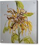 Friendly Sunflower Acrylic Print