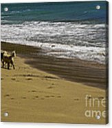 Friends At The Beach Acrylic Print