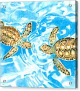 Friends Baby Sea Turtles Acrylic Print