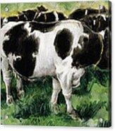 Friesian Cows Acrylic Print
