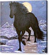Friesian Horse Blue Moonlight Setting Acrylic Print