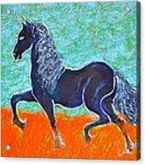 Friesian Horse Acrylic Print