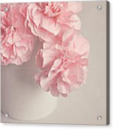Frilly Pink Carnations Acrylic Print