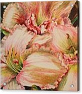 Frilly Pinks Acrylic Print