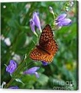 Fritillary Butterfly Acrylic Print