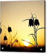 Fritillary Flower Sunset Acrylic Print by Tim Gainey