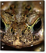 Frog 2 Acrylic Print by Optical Playground By MP Ray